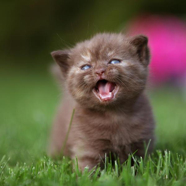 Tess: Кошачьи открытки (#9)