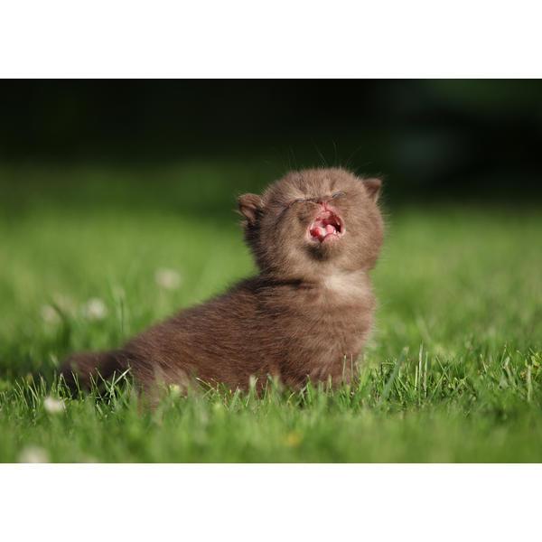 Tess: Кошачьи открытки (#10)