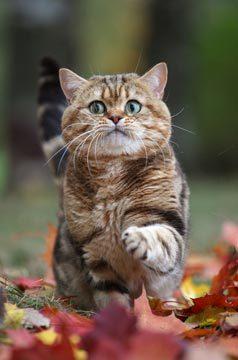 Кошачьи открытки Tess (11 шт.)