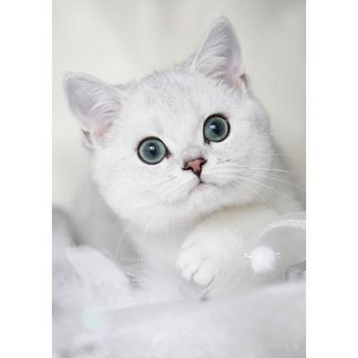 Tess: Кошачьи открытки (#8)