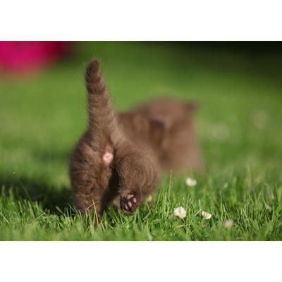 Tess: Кошачьи открытки (#11)