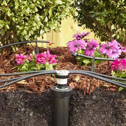Drip Irrigation for Shrubs (Sold)