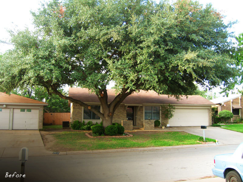 Live Oak Tree 4 Ft  will make blooms this spring! WOW! Click Picture for More pricing and Size Options