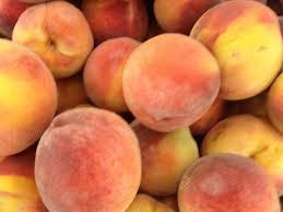 Early Elberta Peach 4 Ft will make fruit this spring! WOW! Click Picture for More pricing and Size Options