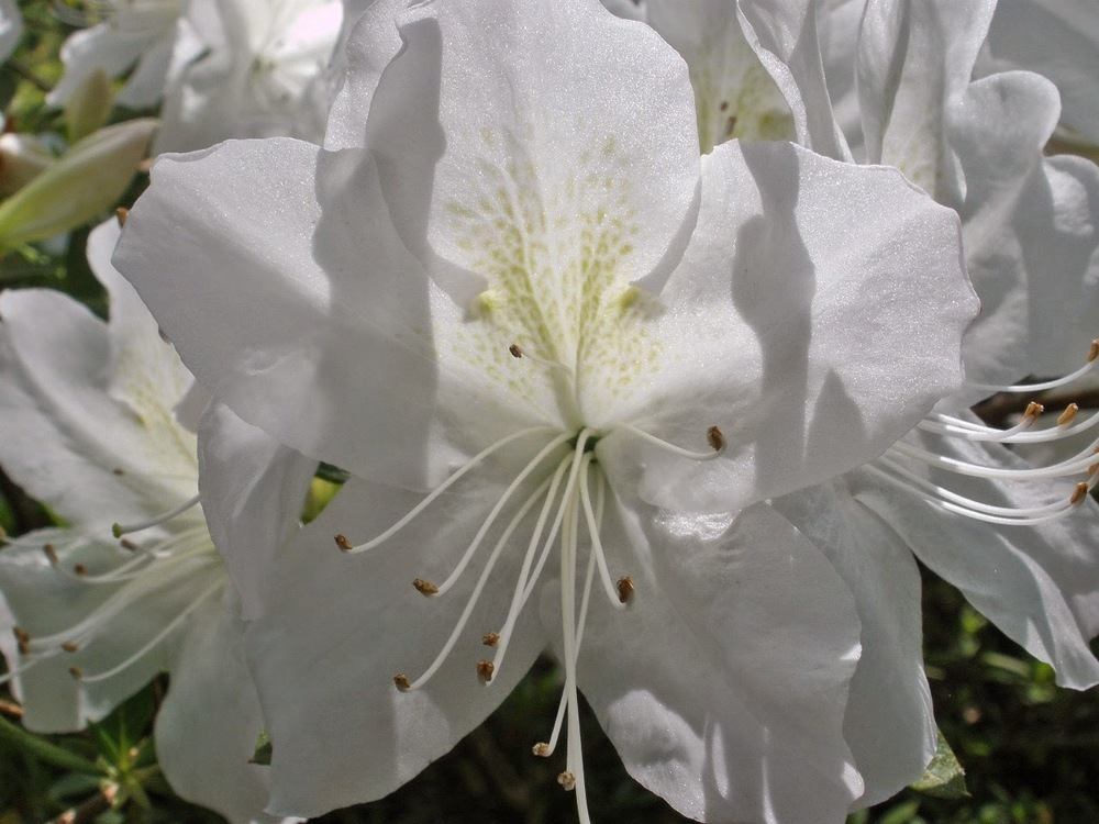 G. G. GERBING Azalea Click Picture for More pricing and Size Options