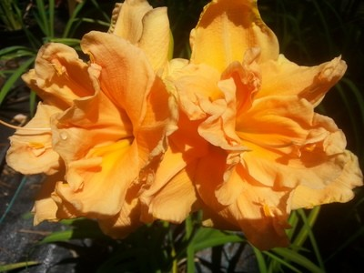 Orange Double Ruffle