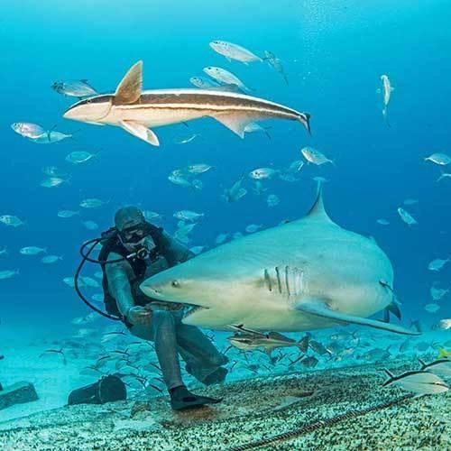 """Погружения с бычьими акулами """"BULL SHARK ENCOUNTER"""""""