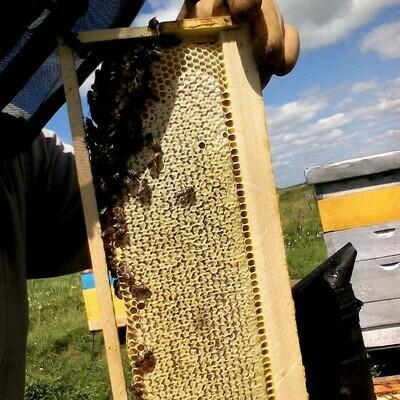 Мёд в сотах, 1,5 кг
