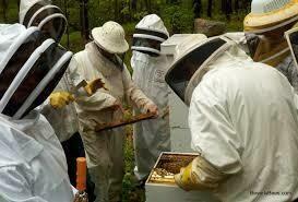 Beekeeping Class - Couple
