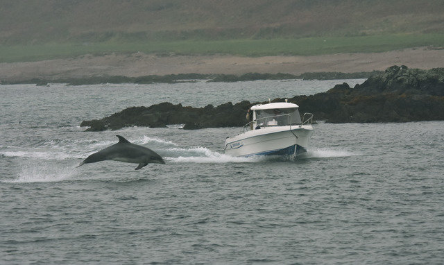 Dolphin, West of Ireland