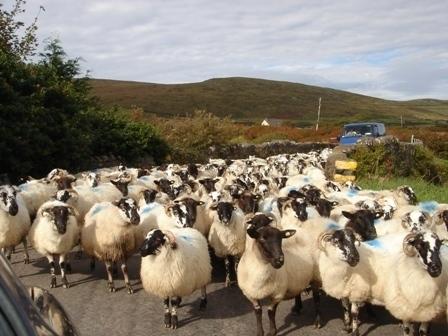 Taking a walk in Ireland
