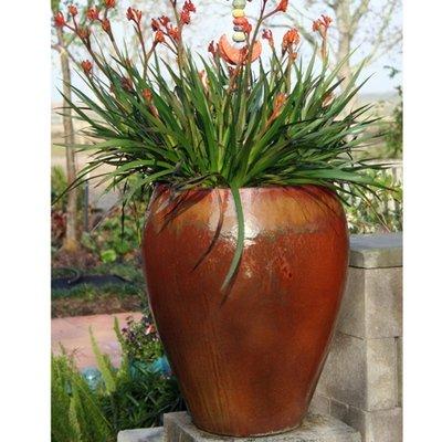 Palomar Jar