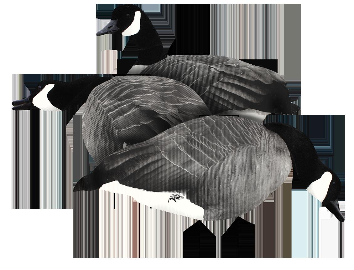 canada goose logo transparent