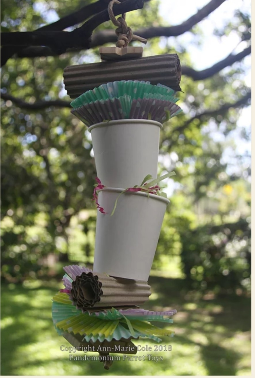 Cassie cup forager