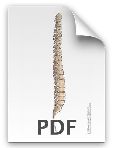 PDF: Gerade Wirbelsäule