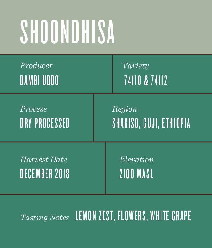 Ethiopia Shoondhisa