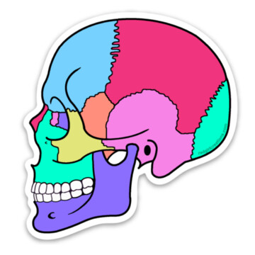 Textbook Anatomy Skull Sticker