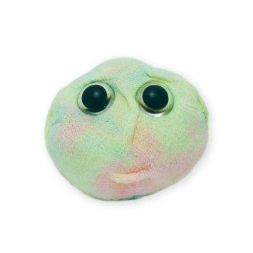 Stem Cell (Stem Cell)