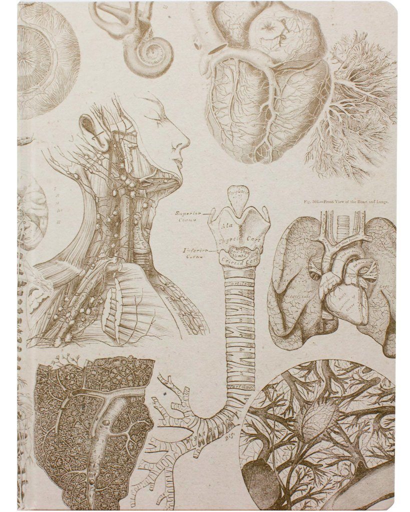 Human Anatomy XL Journal Notebook