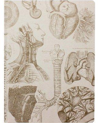 Human Anatomy XL Journal Notebook