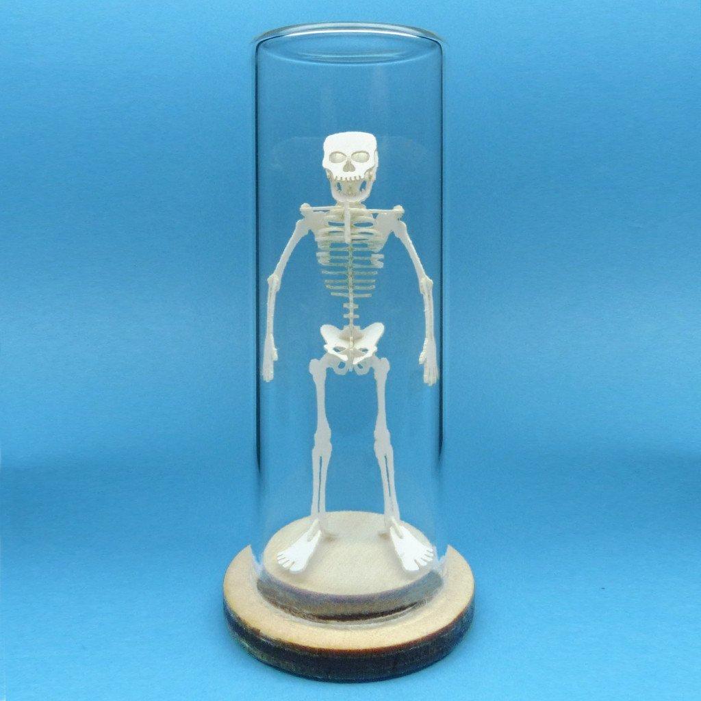 Tiny Human Deluxe Kit - Mini Laser Cut Skeleton Model