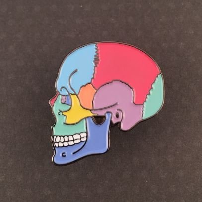 Textbook Anatomy Skull Pin