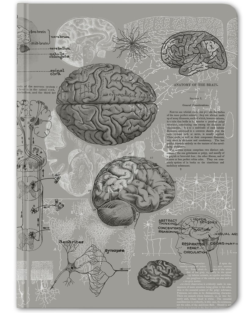 Gray Brain Anatomy Hardcover - Dot Grid