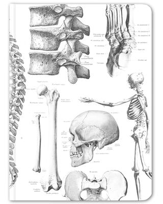 Skeleton Anatomy Hardcover Journal Notebook - Dot Grid