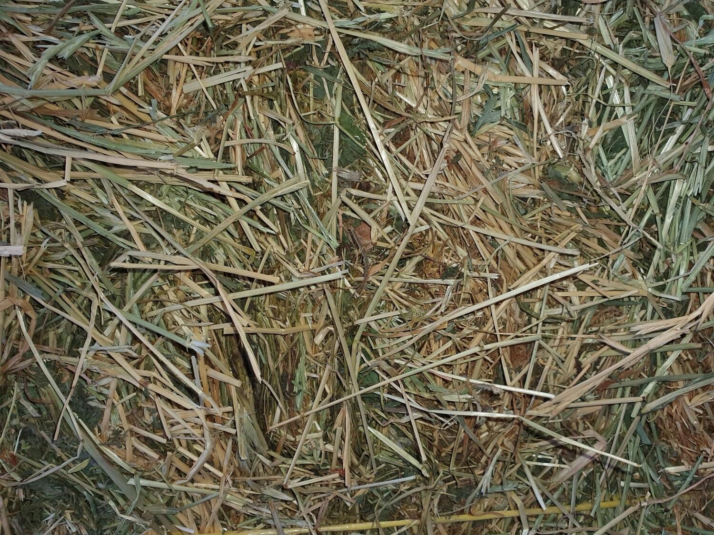 Meadow Clover Rye Mix Hay 1kg bag