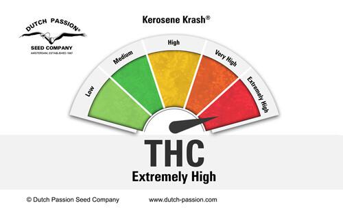 Kerosene Krash THC