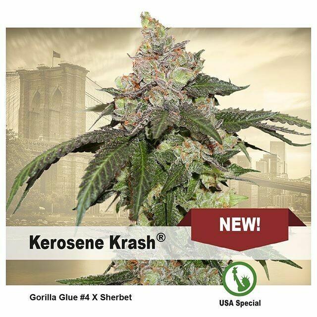 Kerosene Krash