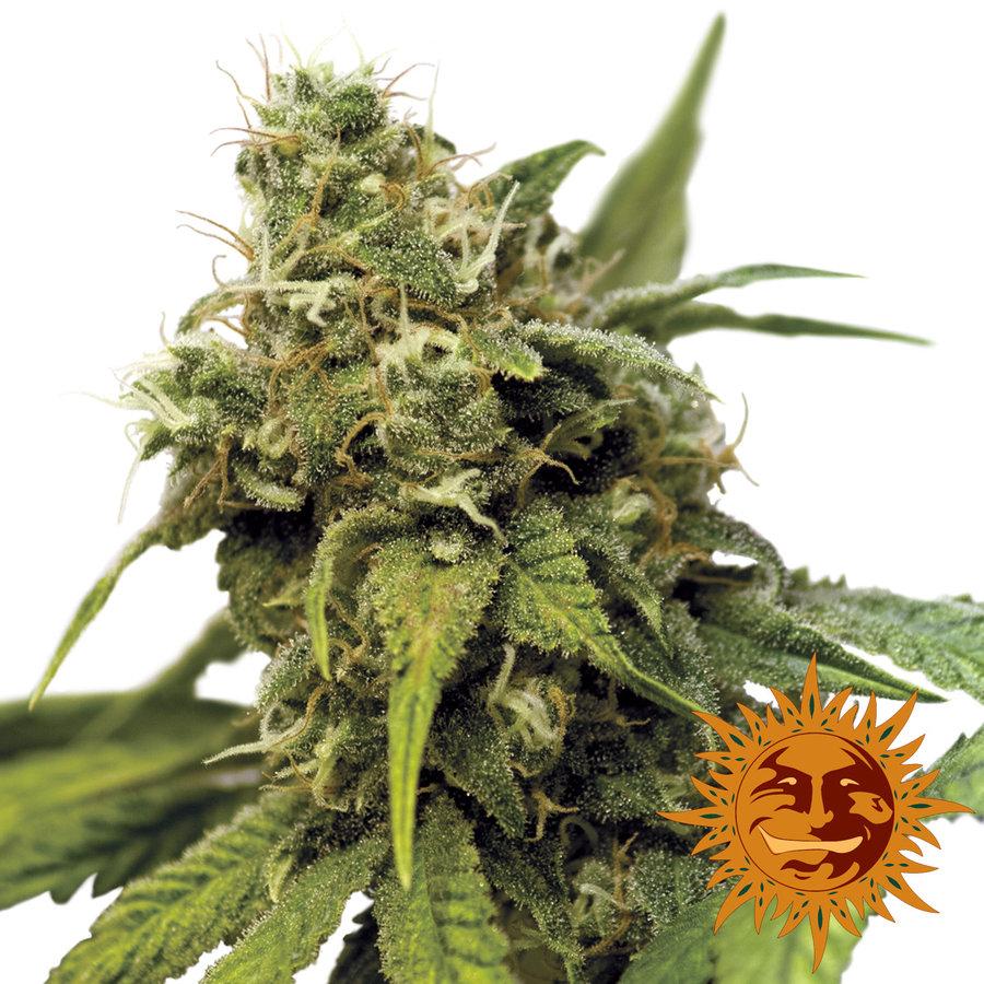 Марихуана пахнет мятой марихуаны пользователь