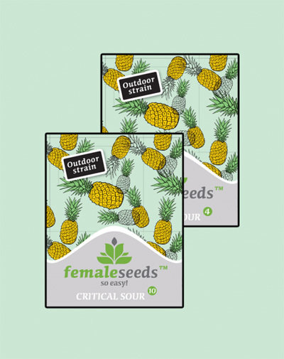 Female Seeds - Critical Sour (fem.)