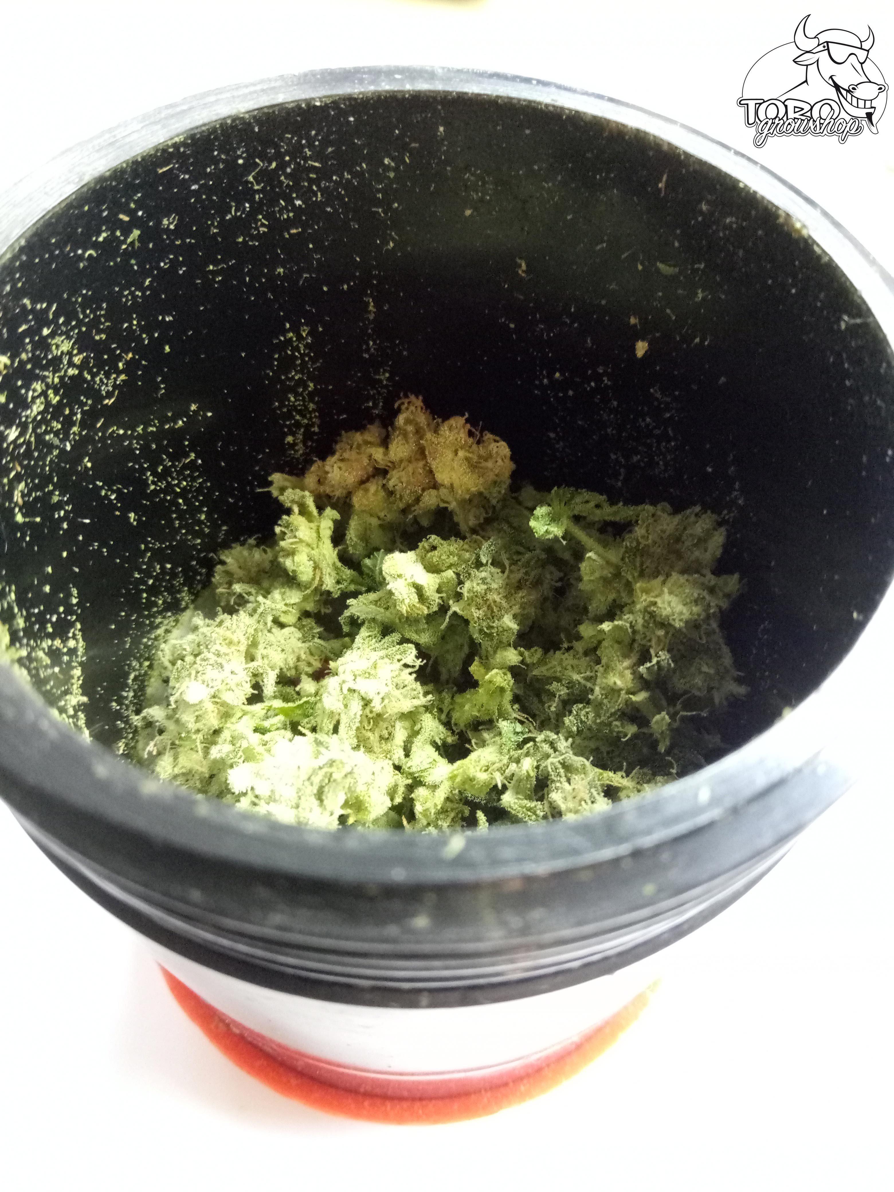Как сделать гашиш с марихуаны барнаул семена конопли