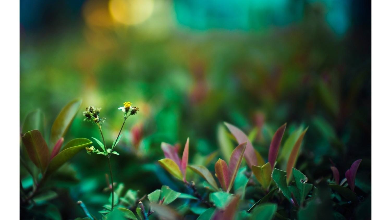 Трава на фотографии