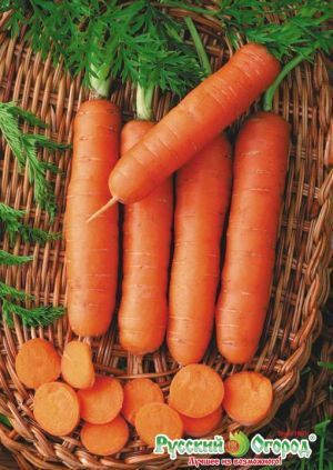 Морковь без сердцевины Пралине  F1 01037