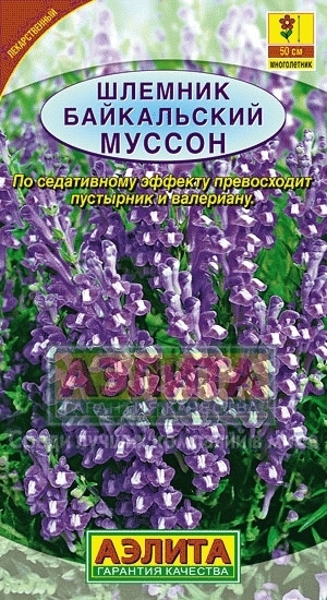 Шлемник байкальский Муссон 01361