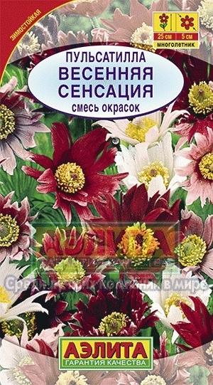 Пульсатилла Весенняя сенсация 01649