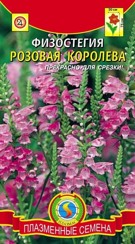 Физостегия Розовая королева 01785
