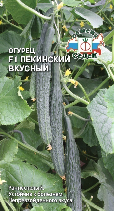 Огурец Пекинский вкусный F1 01903