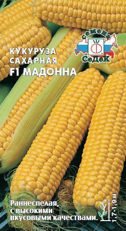 Кукуруза сахарная Мадонна F1 01904