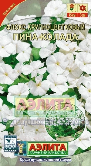 Флокс крупноцветковый Пина Колада 00234