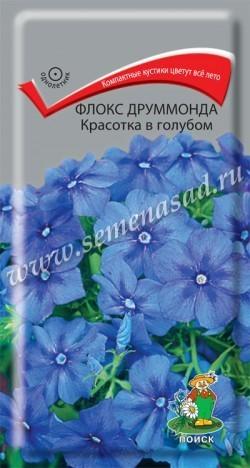 Флокс друммонда Красотка в голубом 00437