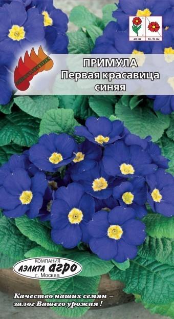 Примула Первая красавица синяя 02017