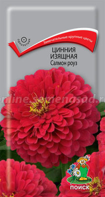 Цинния изящная Салмон роуз