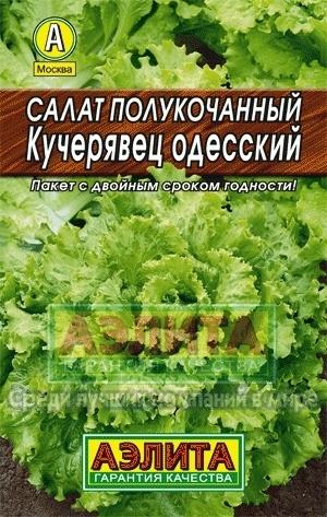 Салат Кучерявец одесский 01957
