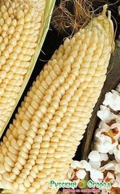Кукуруза Белое облако