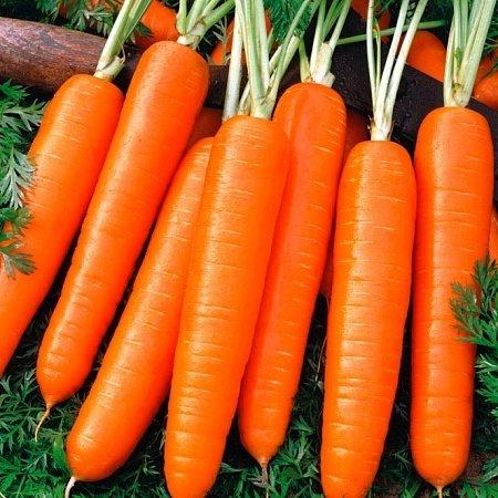 Морковь Нелли F1 02666