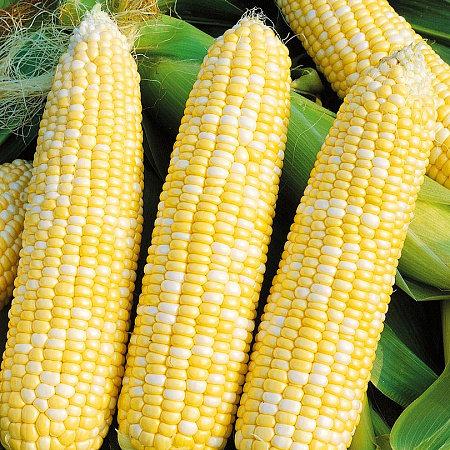 Кукуруза сахарная Счастливчик Жан F1 03478