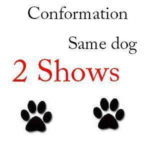 Conformation Same Dog 2 Shows -  $56 + $1 service fee
